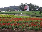 桃園旅遊:20060108大溪花海農場7