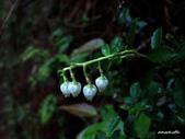 102/05/03~05 雪山主東北稜角植物(四):IMG_8259.JPG
