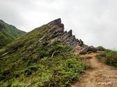 106/05/12 劍龍稜、鋸齒稜、555峰下俯瞰稜出山腰水管路:DSCN4395.JPG