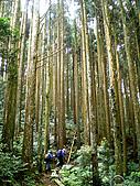 加里山:IMGP0263.jpg