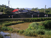 草嶺古道桃源谷:IMGP1862.JPG