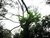102/05/03~05 雪山主東北稜角植物(四):IMG_8268O.jpg