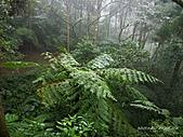 滿月圓檜谷線上多崖山:P1080820.jpg