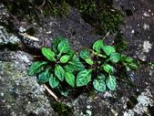 102/06/21~23 武陵二秀池有品田植物:DSC_3561.JPG