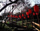 104/03/03 金瓜石_金東坑、金西坑古道:DSCN3593.JPG