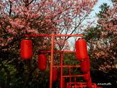 104/03/03 金瓜石_金東坑、金西坑古道:DSCN3596_1.jpg