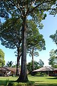 2009/12/22 沙巴亞庇 -長鼻猴生態螢河保護區:DSC_8809.JPG