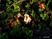 102/06/21~23 武陵二秀池有品田植物:DSC_3737.JPG