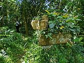 嶐嶐山,荖蘭山,嶐嶐古道:IMGP1544.jpg