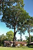 2009/12/22 沙巴亞庇 -長鼻猴生態螢河保護區:DSC_8811.jpg