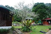 2009/12/21 馬來西亞-神山波令温泉-樹頂吊橋 :DSC_8561.JPG