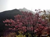 104/03/03 金瓜石_金東坑、金西坑古道:DSCN3610_3.jpg