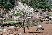 尼泊爾-聖母峰基地營(EBC)3/18-3/20:DSC_0225.jpg