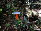 104/04/03 雙溪_蝙蝠山、苕谷瀑布、苕谷坑山:DSCN4938.jpg