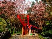 104/03/03 金瓜石_金東坑、金西坑古道:DSCN3598_3.jpg