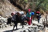 尼泊爾-聖母峰基地營(EBC)3/18-3/20:DSC_0239.jpg