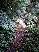 西坑林道:IMGP4290.jpg
