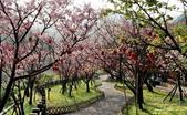 104/03/03 金瓜石_金東坑、金西坑古道:DSCN3611_4.jpg