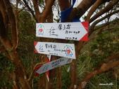 104/11/07 鶯子嶺山、鶯子頂山:DSCN9226.JPG
