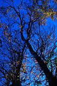 北得拉曼 內鳥嘴山:DSC_4790O.jpg