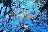北得拉曼 內鳥嘴山:DSC_4792O.jpg