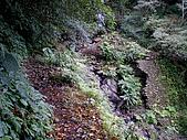西坑林道:IMGP4294.jpg