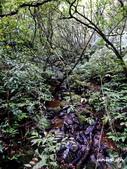 104/05/02 雙溪_芊蓁坑古道越嶺三方向山出大溪川:DSCN5547.jpg