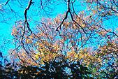 北得拉曼 內鳥嘴山:DSC_4797O.jpg
