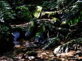 104/04/03 雙溪_蝙蝠山、苕谷瀑布、苕谷坑山:DSCN5009.jpg