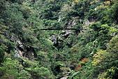 2010/01/10錐麓古道  斷崖駐在所—錐麓斷崖—巴達岡:DSC_9844.jpg