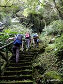 104/04/03 雙溪_蝙蝠山、苕谷瀑布、苕谷坑山:DSCN4870蝙蝠山步道.jpg