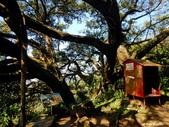 106/12/30 鶯歌、鶯歌石步道、望湖山、石灰坑山、福源山步道、福源山、圳頭山、龜山:DSCN8178_1號大榕樹。 這棵老榕樹就是當地俗稱的「千年大榕樹」,又稱「大樹公」.jpg