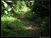 白雞三山:白雞山、雞罩山、鹿窟尖:P1000543.jpg