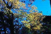 北得拉曼 內鳥嘴山:DSC_4813O.jpg
