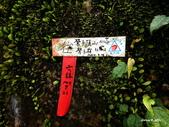 104/11/07 鶯子嶺山、鶯子頂山:DSCN9192.JPG