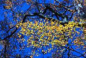 北得拉曼 內鳥嘴山:DSC_4815O.jpg