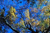 北得拉曼 內鳥嘴山:DSC_4816O.jpg