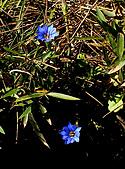 南湖大山5/14:IMGP8093c.jpg