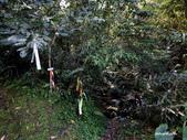 104/04/03 雙溪_蝙蝠山、苕谷瀑布、苕谷坑山:DSCN4954.jpg