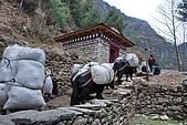 尼泊爾-聖母峰基地營(EBC)3/18-3/20:DSC_0277.jpg