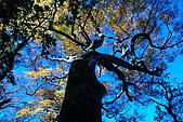 北得拉曼 內鳥嘴山:DSC_4821O.jpg