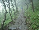 陽明山三池-向天池,七星池,夢幻湖:IMGP1890.JPG