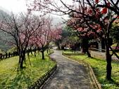 104/03/03 金瓜石_金東坑、金西坑古道:DSCN3612.JPG