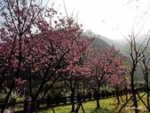 104/03/03 金瓜石_金東坑、金西坑古道:DSCN3613_1.jpg