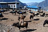 尼泊爾-聖母峰基地營(EBC)3/18-3/20:DSC_0062.JPG