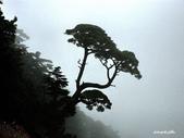 102/06/21~23 武陵二秀池有品田植物:DSC_3579.JPG