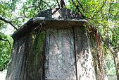 圓山水神社:DSC_1817.JPG
