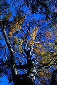 北得拉曼 內鳥嘴山:DSC_4854O.jpg