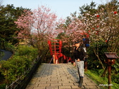 104/03/03 金瓜石_金東坑、金西坑古道:DSCN3601.JPG
