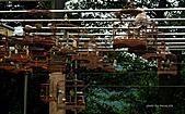 基隆紅淡山~深澳坑縱走—紅淡山.月眉山:P1040906.jpg